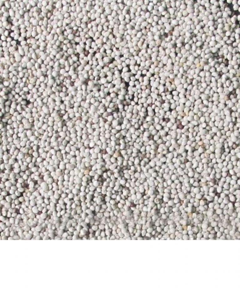 semi di perilla bianca