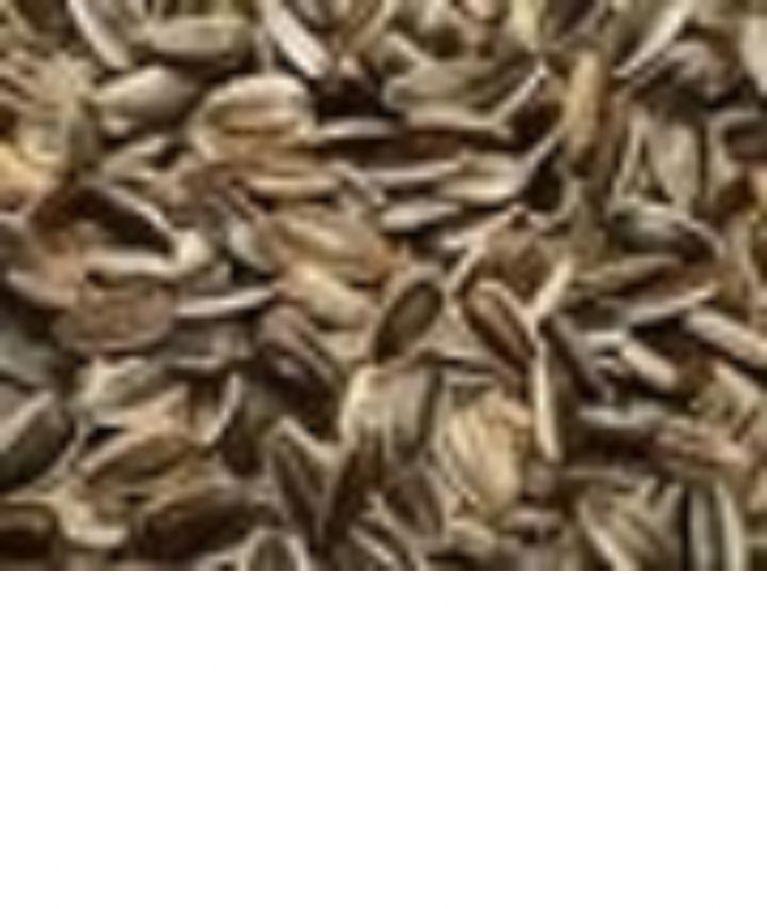<p>GIRASOLE STRIATO</p><p>Seme oleoso particolarmente nutriente e gradito dai pappagalli, ha un contenuto di carboidrati 17,8% proteine 10% grassi 26% , regolatore delle funzioni intestinali. E' infatti spesso presente nelle varie miscele. Essendo un seme oleoso si consiglia una moderata somministrazione. L'uso continuato nel tempo, dona lucentezza al piumaggio e ne aiuta il cambio nei periodi della Muta.</p>
