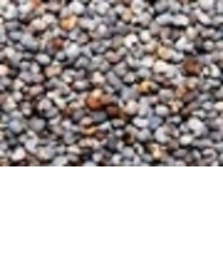 <p>PAPAVERO&nbsp;</p><p>Grani ricavati dalla pianta del papavero, e' un seme molto ricco in materie grasse . Ha proprietà tranquillanti, rilassanti ed emollienti. Ideale per calmare gli uccelli per le esposizioni .Un sovradosaggio può frenare il canto degli uccelli .&nbsp;</p>
