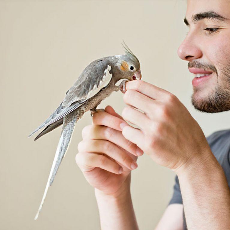 miscele per uccelli