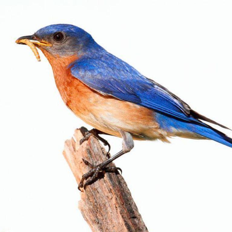 prodotti per ornitologia